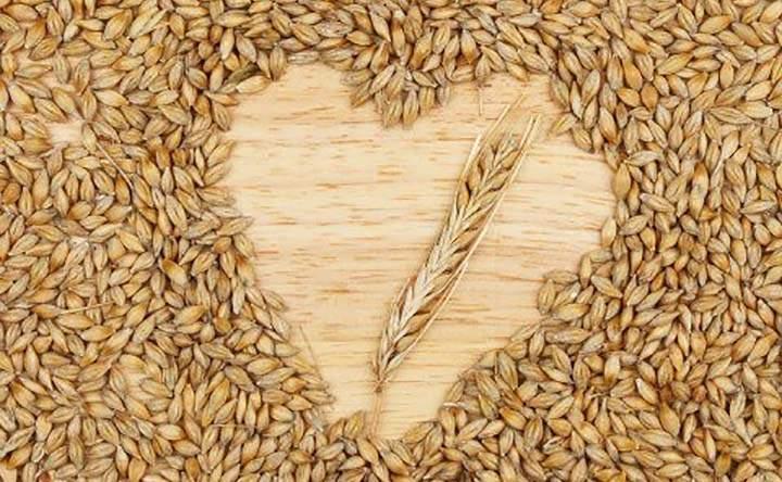 Orzo: il cereale che mantiene stabile il peso, il livello di colesterolo e di stress