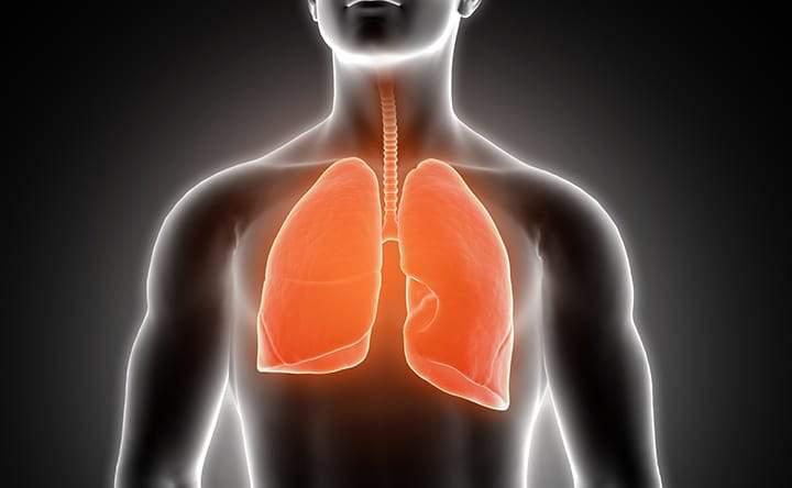 Colesterolo: alleato sottovalutato per il benessere dei nostri polmoni