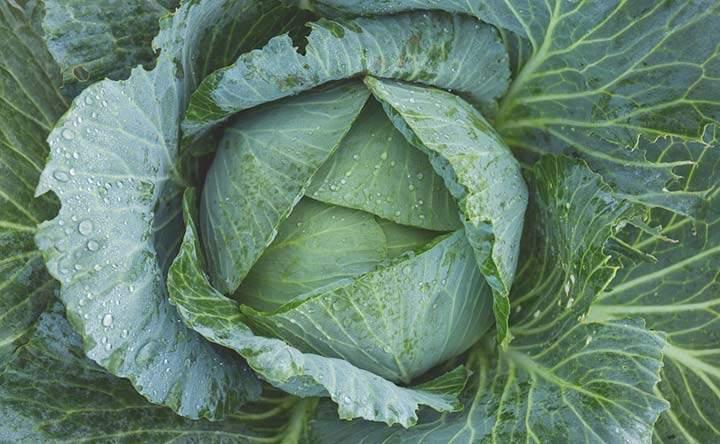 Cavolo verde: proprietà nutrizionali e benefici