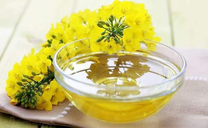 L'olio di Camelina migliora il profilo lipidico del sangue