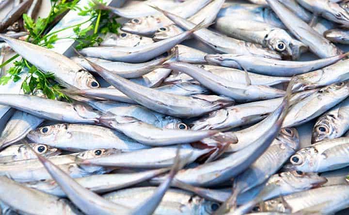 Cuore in forma grazie al pesce azzurro