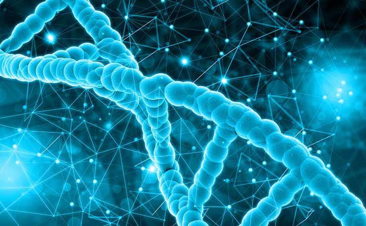 Modifica genetica per abbassare il colesterolo nelle scimmie, lo studio