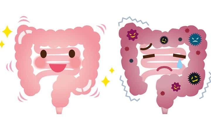 L'importanza di un intestino sano per abbassare il colesterolo