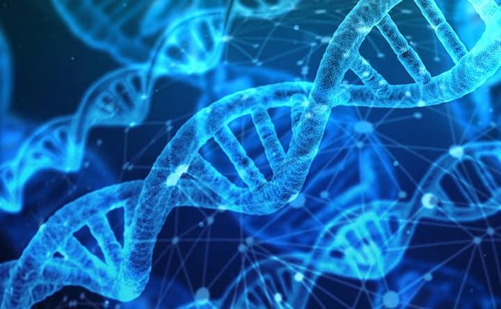 Scoperto un gene che condiziona il recupero da un ictus