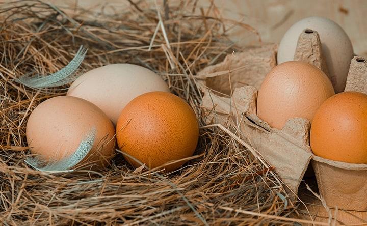 L'assoluzione delle uova